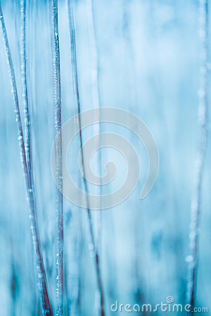 Free Frosted Grass And Plants Stock Photos - 36892503