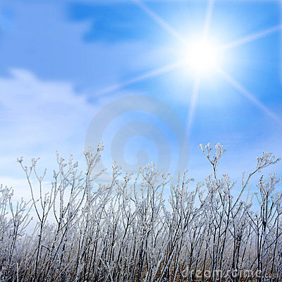 Frosted grass and winter sun