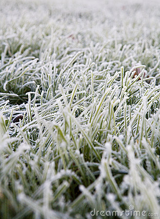 Free Frosted Green Grass Stock Image - 14899731