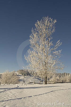 Free Frosted Tree Stock Photo - 7241660