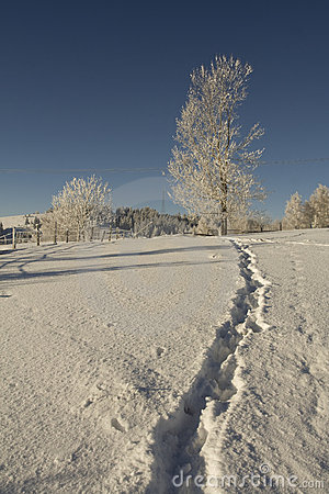 Free Frosted Tree And Snow Path Stock Image - 7249541
