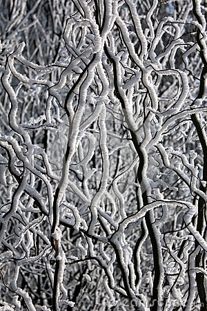 Free Frosted Tree Branches Stock Images - 41069624