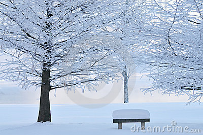 Frosted Trees and Park Bench