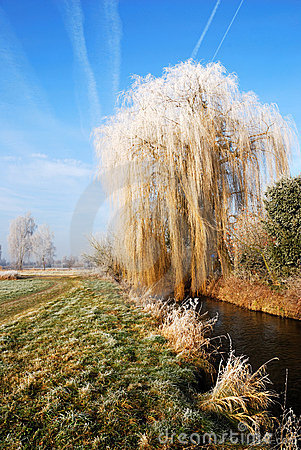 Free Frosted Weeping Willow Stock Image - 1709481