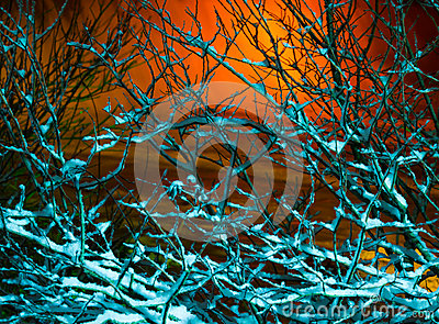 Frosty branches in the night