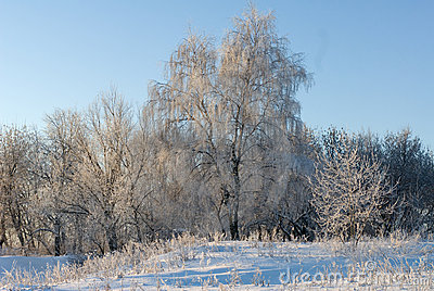 Frosty day in winter