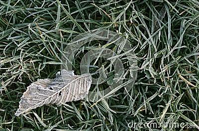 Frosty fallen leaf