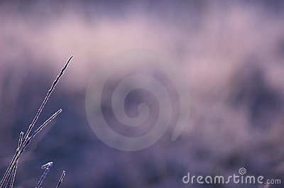 Frosty Grass Background