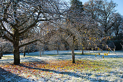 Frosty morning in the park