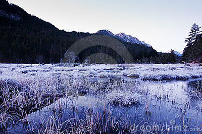 Frosty swamp in winter scenery