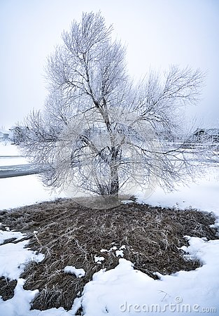 Free Frosty Tree In Winter Landscape. Stock Image - 140811851