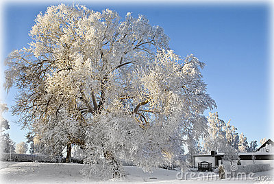 Frosty tree landscape