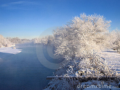 Frosty white trees by river