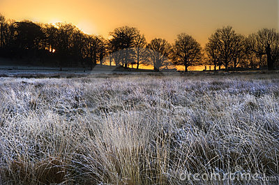 Frosty Winter landscape across field at sunrise