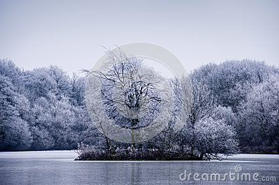 Frosty winter tree landscape on a lake
