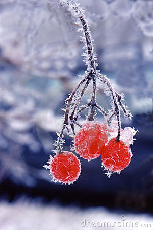 Free Frozen Berries Royalty Free Stock Image - 590696
