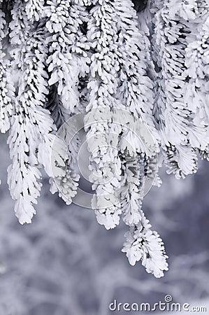 Frozen branch 2
