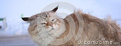 Frozen cat in the wind