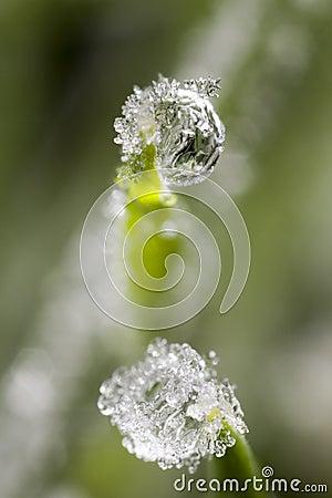 Free Frozen Drew Drops Stock Photo - 3892520