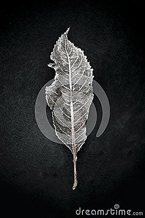 Free Frozen Fallen Dead Autumn Leaf. Stock Image - 24258461