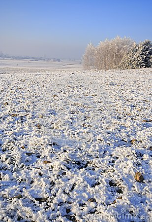 Frozen fields and meadows