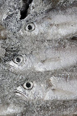 Frozen fish in the ice