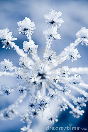 Free Frozen Flower Stock Images - 16622264