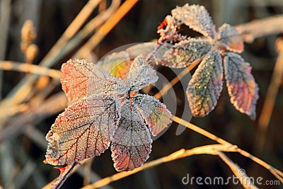 Frozen foliage