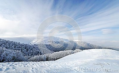 Frozen forest and meadows in Carpathians panorama