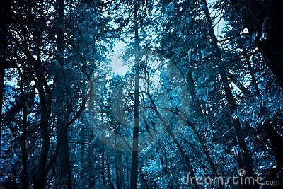 The Frozen Forrest