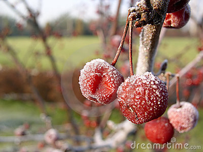 Frozen fruits #01