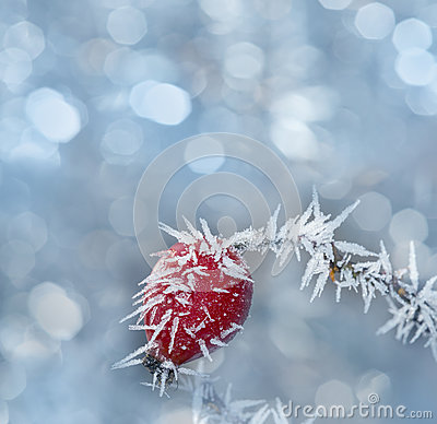 Free Frozen Hip Stock Images - 36650044