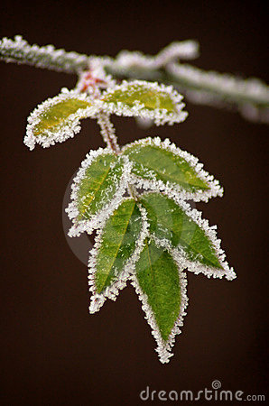 Free Frozen Leaves Stock Image - 1857181