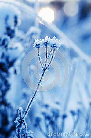 Free Frozen Meadow Plant Stock Photography - 49231652