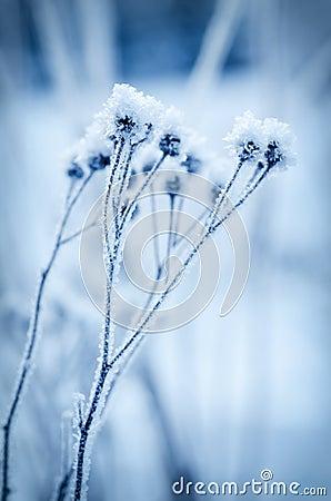 Free Frozen Meadow Plant Stock Photos - 60142753