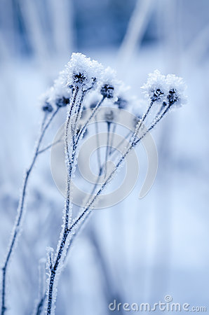Free Frozen Meadow Plant Royalty Free Stock Image - 60143076