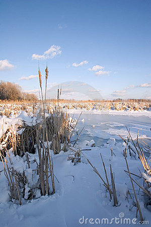 Free Frozen Mississippi River Wetlands Royalty Free Stock Image - 586226
