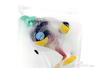 Frozen Penguin
