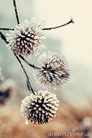 Free Frozen Plant Covered With Hoarfrost Stock Images - 88819904