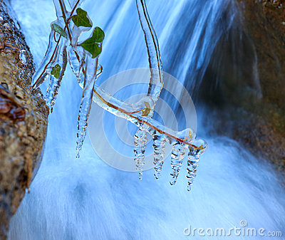 Frozen plant near waterfall