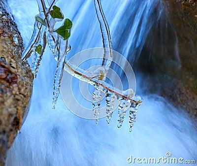 Frozen plant near waterfall