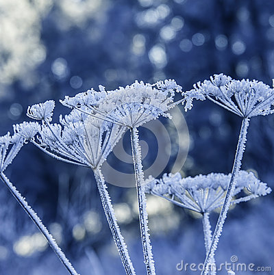 Free Frozen Plants Stock Images - 45036564