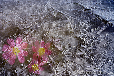 The frozen purple flowers