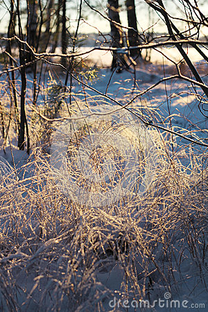 Frozen reeds and twigs, winter season concept