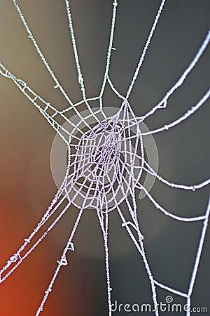 Frozen Spider web macro