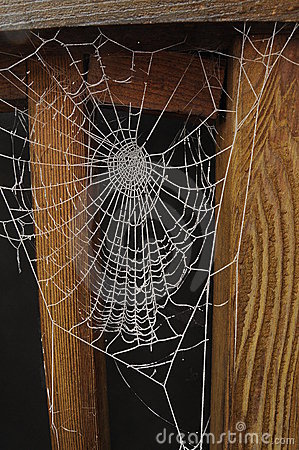 Free Frozen Spiderweb Isolated On Black Royalty Free Stock Photo - 17656145