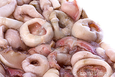 Frozen Squid Rings Isolated