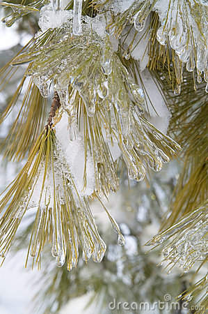 Free Frozen Tree Royalty Free Stock Image - 2077686