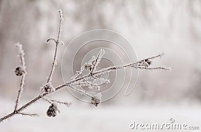 Frozen tree brunch