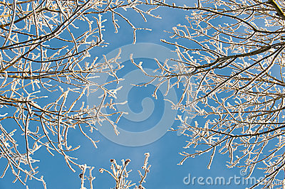 Frozen tree covered in frost